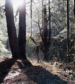 Hola, al Gigante en el bosque
